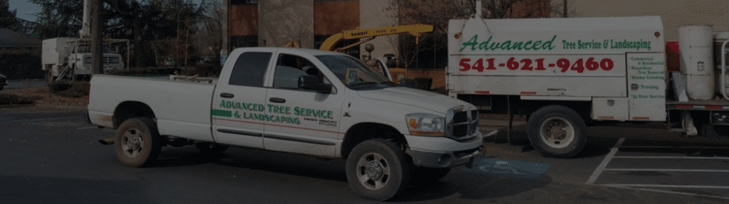 Advanced Tree Service Medford