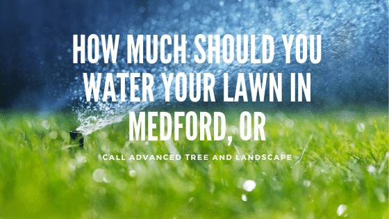 How Much Should You Water Your Lawn in Medford, OR